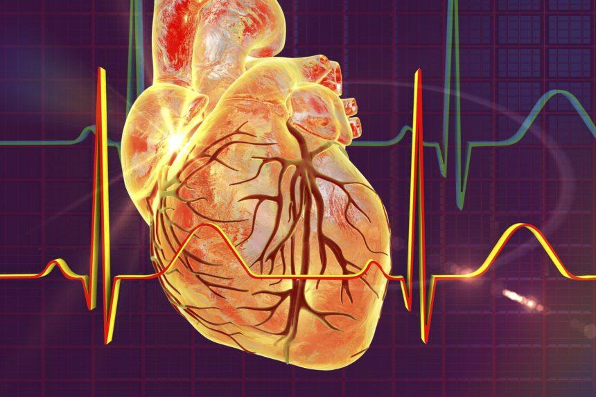 Heart, rhythm, echocardiogram