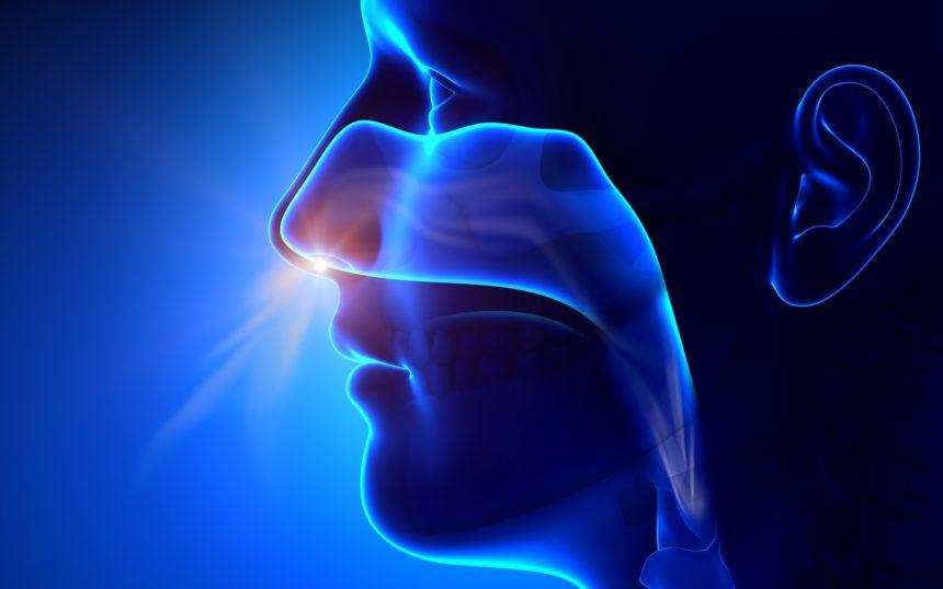 Sinuses, nose