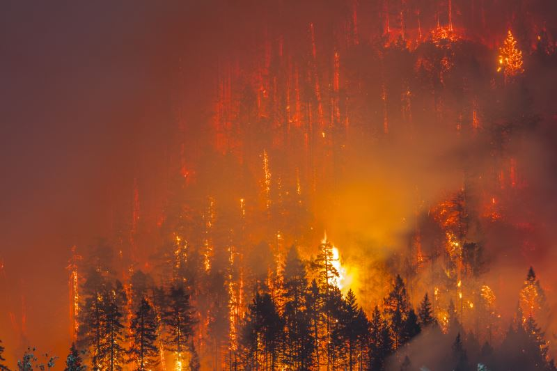 A wildfire in the forest