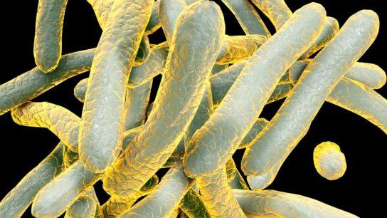 Risk for developing active tuberculosis has not been previously assessed in patients undergoing HSCT
