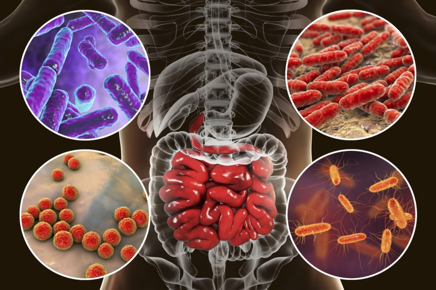 intestinal microbiome gut bacteria small intestine